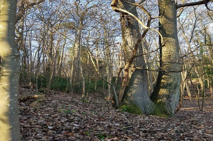 Coupe de bois - Forêt Départemental des Tailles d'Herbelay à Aigremont